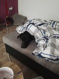 Daruji psa - stáří 8 měsíců