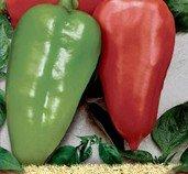 Paprika Sandra - semena