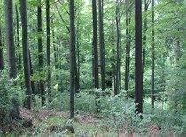 Prodám les okres Šumperk